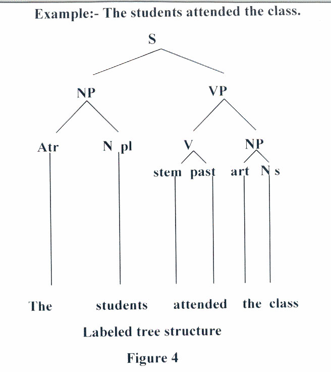 Linguistic Tree Diagram